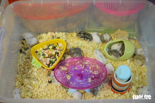 Trước Tết Canh Tý, thú cưng chuột hamster cháy hàng - Ảnh 5.