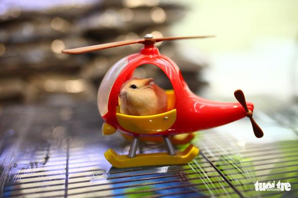 Trước Tết Canh Tý, thú cưng chuột hamster cháy hàng - Ảnh 1.
