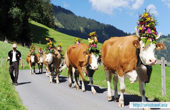 Khám phá nét đẹp Thụy Sĩ: Berne, Geneva, Lucerne từ 16.190.000 đồng - Ảnh 1.