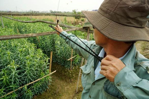 Chính quyền tỉnh Thừa Thiên Huế ra chỉ thị bảo vệ chim trời - Ảnh 1.