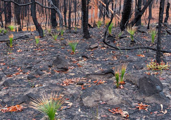 Nhiệt độ lên 40 độ C, Úc hồi hộp chờ mưa ngăn cháy rừng - Ảnh 2.
