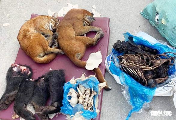 Chở gần 1 tấn pháo cùng động vật hoang dã về Việt Nam, một xe khách biển số Lào bị bắt - Ảnh 2.