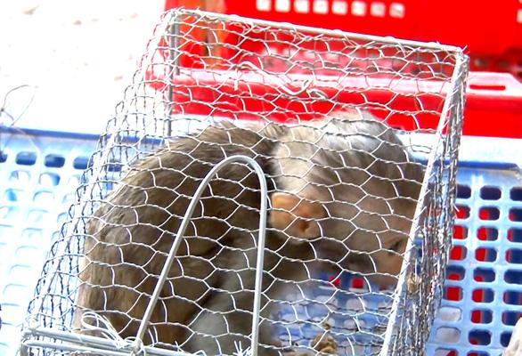 Bị tạm giữ nhiều động vật quý hiếm, chủ trại chết nghi treo cổ - Ảnh 2.