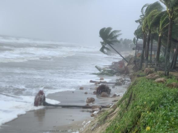 Bờ biển Hội An lại nát tan sau bão - Ảnh 1.