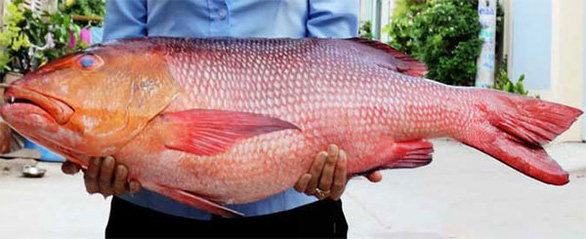 10 người nhập viện nghi ngộ độc do ăn cá hồng chuối - Ảnh 1.