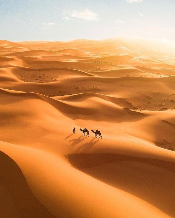 Kỳ lạ khi phát hiện có 1,8 tỉ cây xanh ở vùng đất chết Sahara - Ảnh 2.