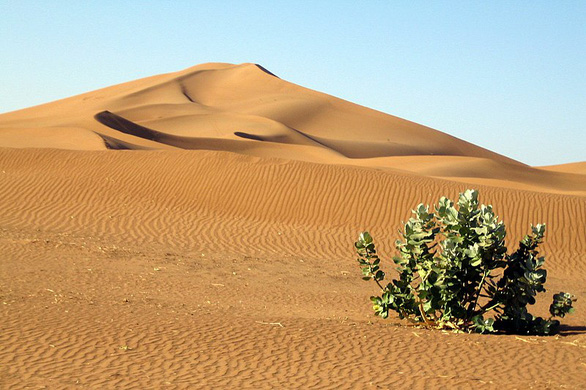 Kỳ lạ khi phát hiện có 1,8 tỉ cây xanh ở vùng đất chết Sahara - Ảnh 1.