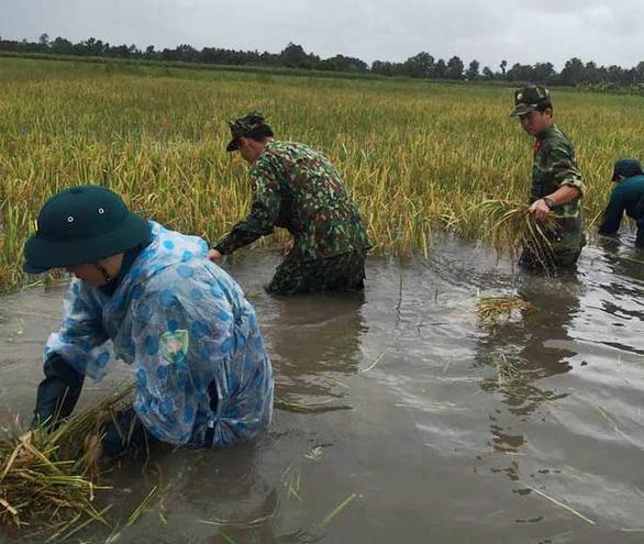 Bộ đội giúp dân thu hoạch lúa ngập úng ngoài đồng - Ảnh 2.