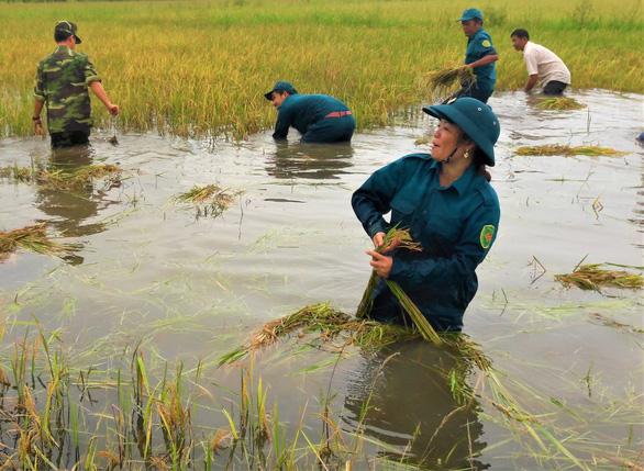 Bộ đội giúp dân thu hoạch lúa ngập úng ngoài đồng - Ảnh 1.