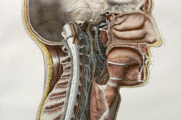 Phát hiện cơ quan hoàn toàn mới trong cơ thể người: tuyến nước bọt thứ 4 - Ảnh 1.