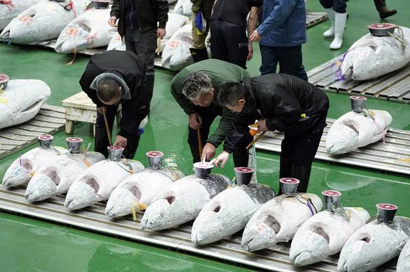 Nhật khai thác cá hiệu quả nhờ AI - Ảnh 1.