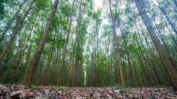 Quản lý rừng Bắc Trung Bộ bền vững, Việt Nam sẽ được 'rót' hơn 50 triệu USD - Ảnh 1.