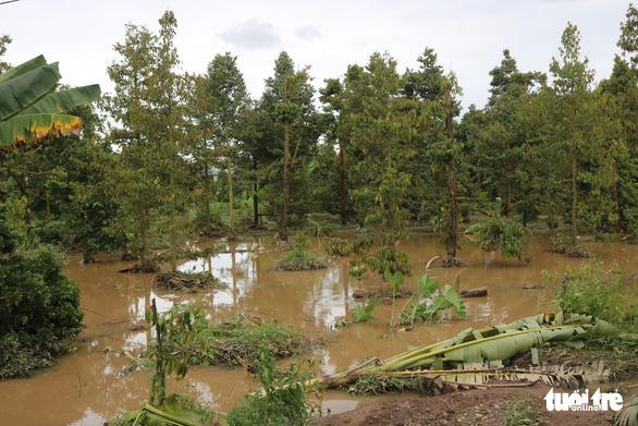 Sạt đường, triều cường tràn vào ngập úng vườn cây 120 hộ dân - Ảnh 2.