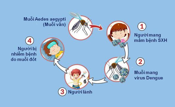 Không nên xem nhẹ dịch bệnh sốt xuất huyết và các bệnh do muỗi gây ra - Ảnh 1.