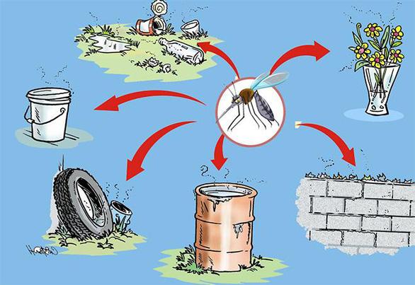 Không nên xem nhẹ dịch bệnh sốt xuất huyết và các bệnh do muỗi gây ra - Ảnh 4.
