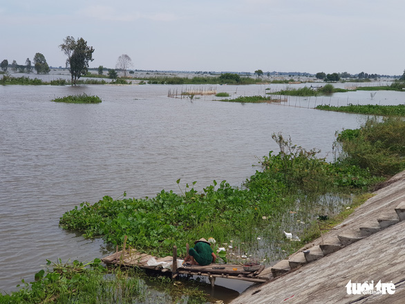 Đồng bằng sông Cửu Long: Lũ sẽ xuống chậm trong các ngày tới - Ảnh 1.