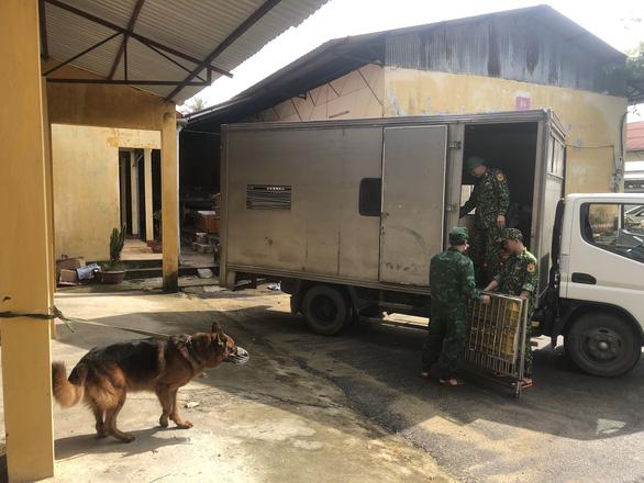 Lực lượng tìm kiếm đưa chó nghiệp vụ trở lại thủy điện Rào Trăng 3 - Ảnh 1.