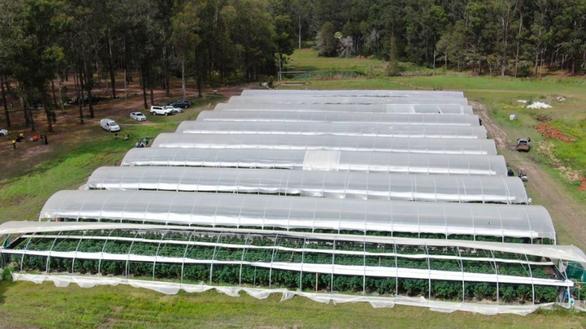 Úc bắt 14 người Việt, tịch thu hơn 13.000 cây cần sa - Ảnh 3.