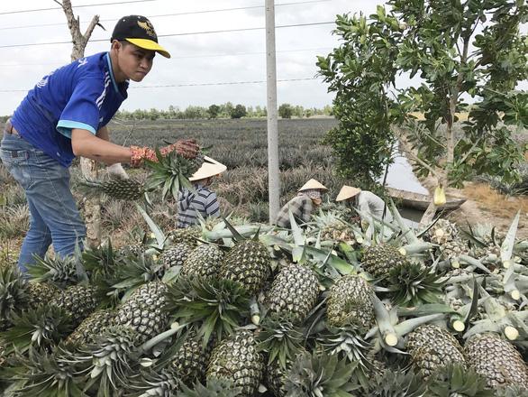 Saigon Co.op tiếp tục bao tiêu nông sản giá trị cao miền Tây - Ảnh 1.