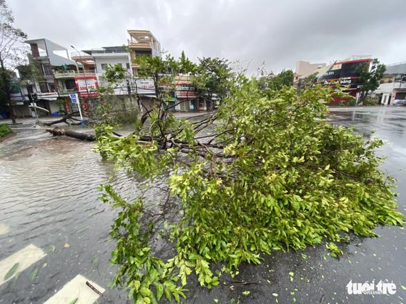 Bão vô Quảng Ngãi: Cổng chào bằng thép, cây xanh ngã đổ - Ảnh 10.