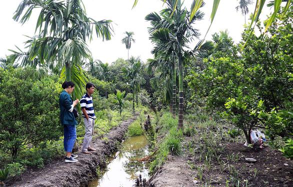 Sài Gòn nhớ nhớ thương thương - Kỳ 3: An Phú Đông, vườn xưa bên phố - Ảnh 1.