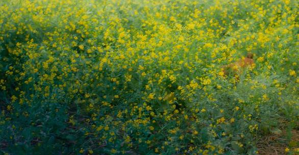 Phim Cậu Vàng công bố hình ảnh đầu tiên của lão Hạc và chú chó - Ảnh 5.