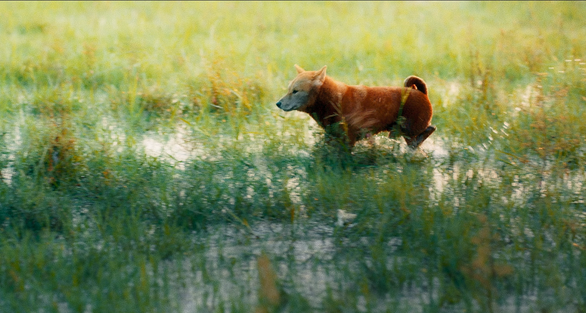 Phim Cậu Vàng công bố hình ảnh đầu tiên của lão Hạc và chú chó - Ảnh 6.
