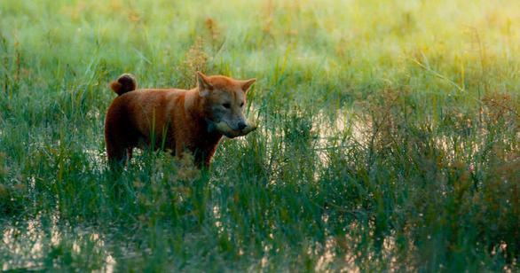 Phim Cậu Vàng công bố hình ảnh đầu tiên của lão Hạc và chú chó - Ảnh 3.