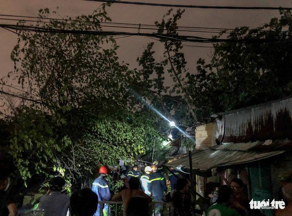 Cây đổ đè sập nhà, người dân thoát chết trong gang tấc - Ảnh 2.