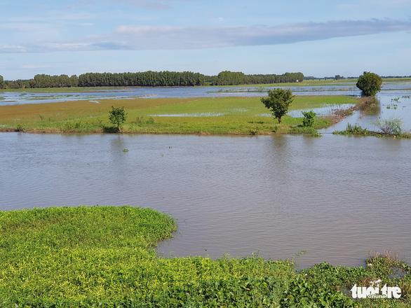 Đặc sản mùa lũ giảm giá và nước bắt đầu rút - Ảnh 2.