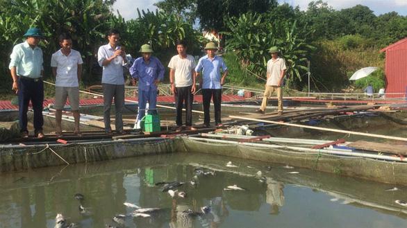 Thủy điện Hòa Bình xả lũ: Cá chết tăng thêm hàng chục tấn - Ảnh 2.