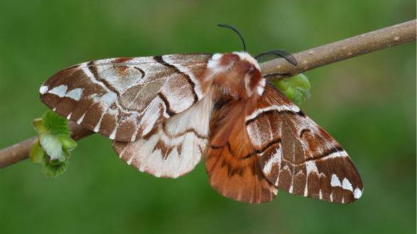 Phát hiện chim lưỡng tính 2 màu cực hiếm - Ảnh 6.