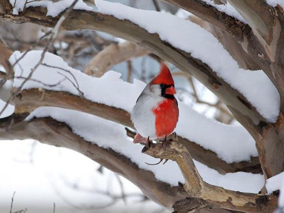 Phát hiện chim lưỡng tính 2 màu cực hiếm - Ảnh 5.