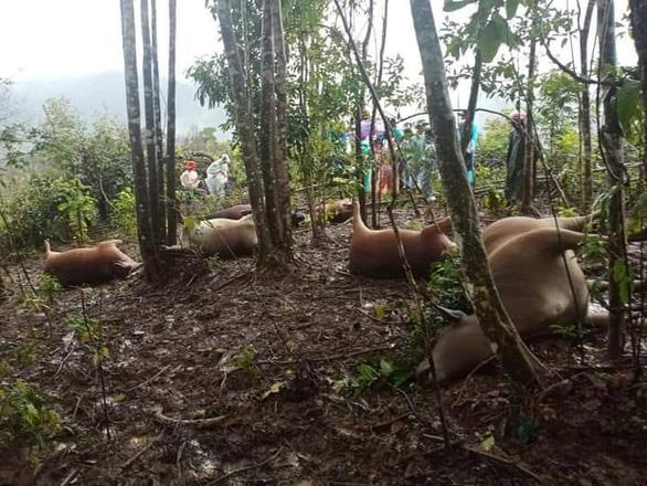 7 con bò bị sét đánh chết cùng lúc, sạt lở tiếp tục chia cắt nhiều xã tại Quảng Nam - Ảnh 2.