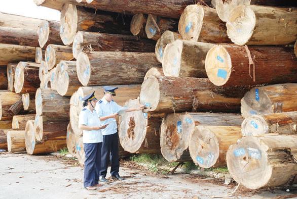 Hải quan siết nguồn gốc gỗ nguyên liệu bạch dương nhập khẩu - Ảnh 1.