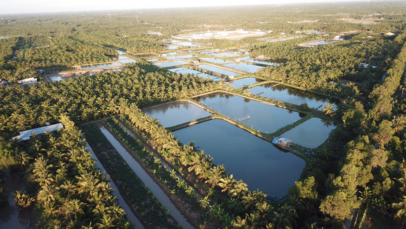 """Xứ dừa Bến Tre biến dòng sông đen"""" thành dòng sông thơm - Ảnh 2."""