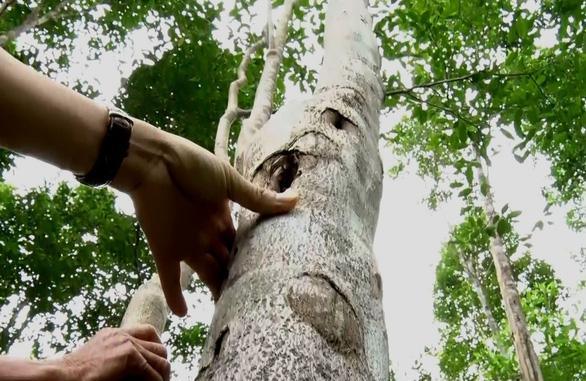 Đã có cách mạng trồng rừng gỗ lớn - Ảnh 1.