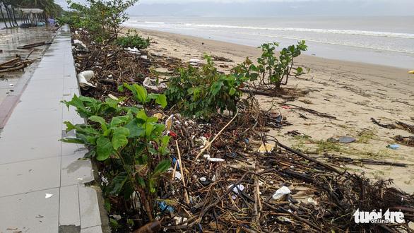 Củi tấp vào bờ biển Đà Nẵng sau bão, người dân tranh thủ nhặt - Ảnh 3.
