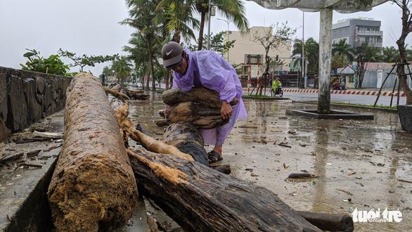 Củi tấp vào bờ biển Đà Nẵng sau bão, người dân tranh thủ nhặt - Ảnh 2.