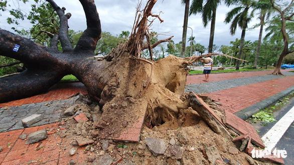 Bão vào miền Trung, mưa lớn, cây bật gốc, trường học tốc mái - Ảnh 4.