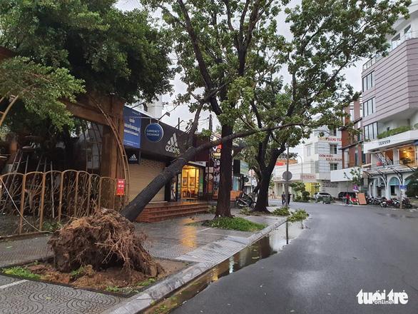Bão vào miền Trung, mưa lớn, cây bật gốc, trường học tốc mái - Ảnh 5.