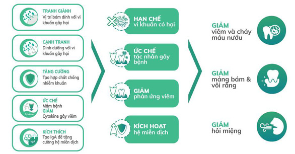 Men vi sinh nha khoa - giải pháp mới cho bệnh viêm nha chu - Ảnh 2.