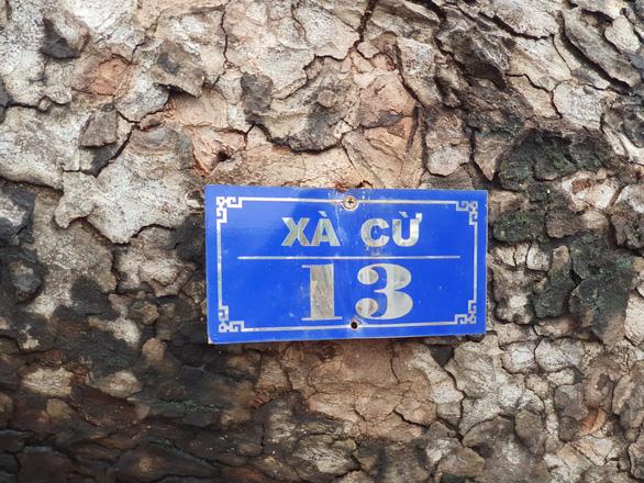 Tiếc nuối cây xà cừ hơn trăm tuổi ở Huế bị bão số 13 quật ngã - Ảnh 7.