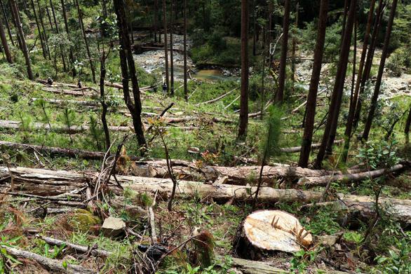 Phó thủ tướng yêu cầu xử lý nghiêm vụ phá rừng phòng hộ ở Lâm Đồng - Ảnh 1.