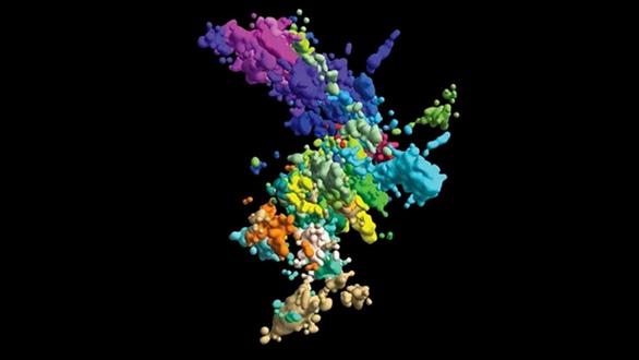 Khoa học chụp ảnh chân dung thật sự của nhiễm sắc thể, không như trong sách - Ảnh 1.