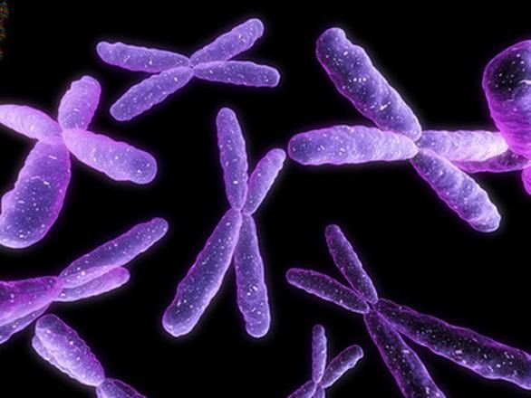 Khoa học chụp ảnh chân dung thật sự của nhiễm sắc thể, không như trong sách - Ảnh 2.