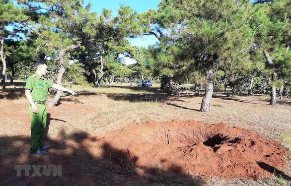 Gia Lai: Đào trộm thông hàng chục năm tuổi ở đồi cỏ hồng - Ảnh 1.