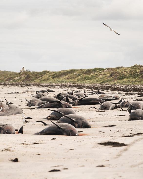 Hơn 120 con cá voi, cá heo chết do mắc cạn - Ảnh 1.