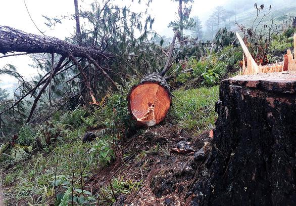 Đầu tiên, họ giết một cây... - Ảnh 1.