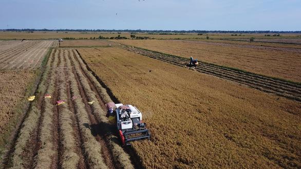 Giá gạo Việt xuất khẩu cao nhất trong 9 năm - Ảnh 2.